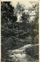 SCENE IN WATERFALL WOODS