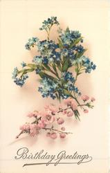 BIRTHDAY GREETINGS forget-me-nots & pink blossoms