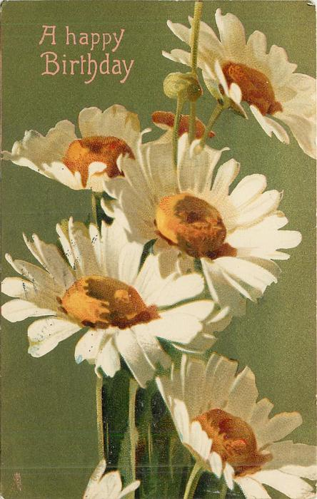 A HAPPY BIRTHDAY  white daisies with yellow centres
