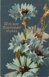 WITH BEST BIRTHDAY WISHES  five upright blue  corn-flowers with purple centers, other buds