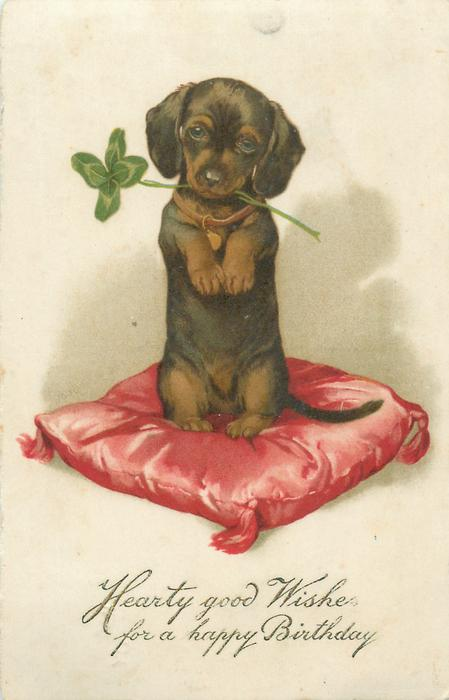 HEARTY GOOD WISHES FOR A HAPPY BIRTHDAY  dachshund puppy on red cushion, 4 leaf clover in its mouth