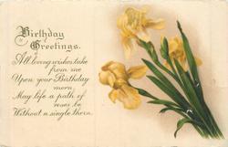 BIRTHDAY GREETINGS yellow irises