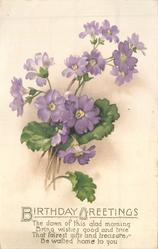 BIRTHDAY GREETINGS purple primulas