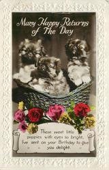 MANY HAPPY RETURNS OF THE DAY   three pekingese puppies