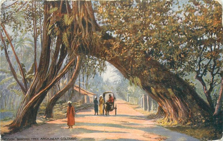 BANYAN TREE ARCH, NEAR COLOMBO