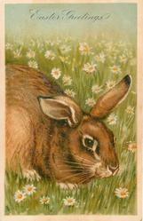 EASTER GREETINGS  rabbit crouches in field of daises, facing right