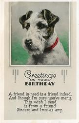 GREETINGS ON YOUR BIRTHDAY   terrier