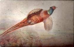 pheasant in the air