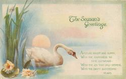 THE SEASON'S GREETINGS  swan on water