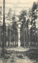 WOKINGHAM BERKS, PINEWOOD.  AVENUE OF PINE TREES