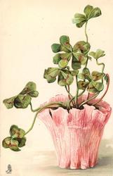 four leaf clover plant light pink pot