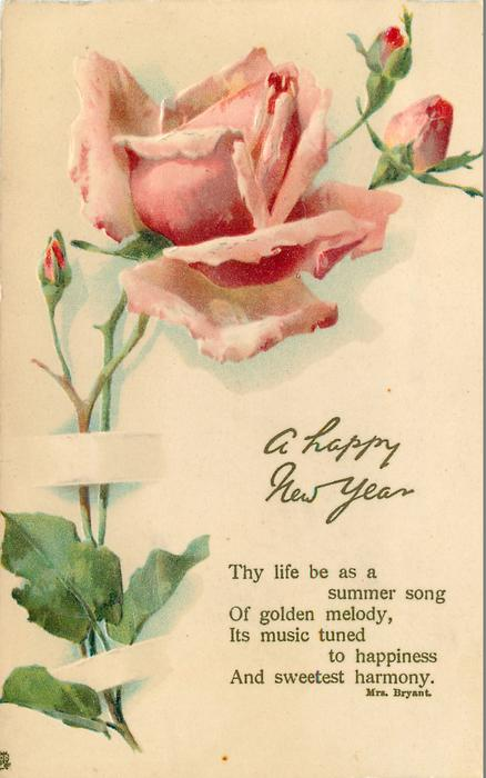 a happy new year pink rose buds