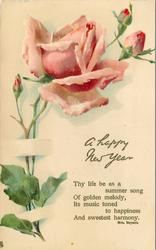 A HAPPY NEW YEAR  pink rose & buds