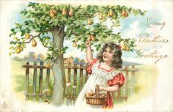 LOVING CHRISTMAS GREETINGS  girl  picking pears