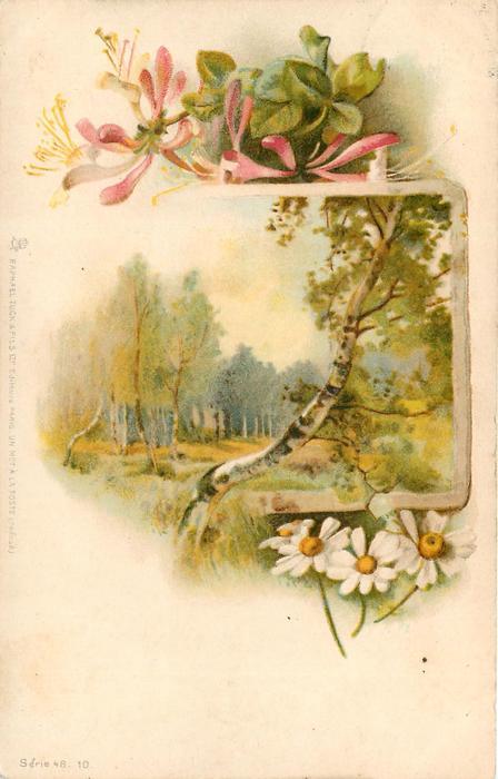 woodland scene, honeysuckle above, daisies below