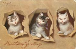 three kittens in holes through yellow background, left kitten is white, grey on top of head, middle one is white & grey, right kitten is white with pale brown patches patches