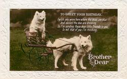 TO GREET YOUR BIRTHDAY BROTHER DEAR  two white Samoyed dogs, one pulling the other on a cart