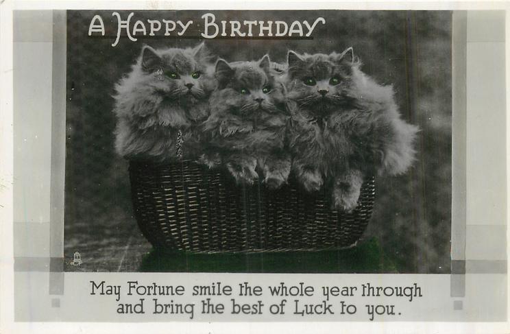 A HAPPY BIRTHDAY basket of grey kittens