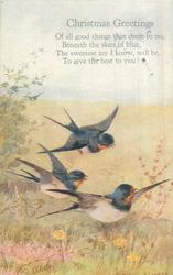 CHRISTMAS GREETINGS    three swallows
