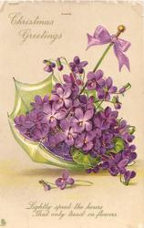 MERRY CHRISTMAS GREETINGS  violets in tiny uplurned umbrella