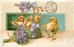 three yellow chicks in basket filled with violets, one outside right