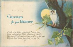 GREETINGS FOR YOUR BIRTHDAY night scene with owl
