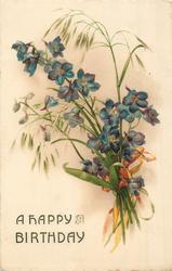 A HAPPY BIRTHDAY blue violets & seeding grass