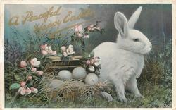 A PEACEFUL HAPPY EASTER white rabbit to right of nest of eggs, apple blossom above