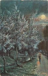 night view man with light walks front on road, masses of blossom left & back, moon