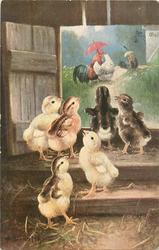 six chicks in barn, poultry with umbrellas outside