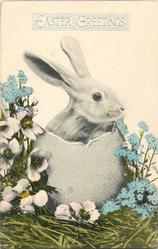 white bunny in egg with blue forget-me-nots & white anemones, straw around