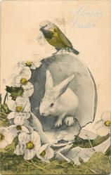 one white bunny with a BIRD sitting on egg, white flowers
