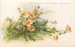 BUTTERCUPS AND FORGET-ME-NOTS