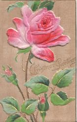 CHRISTMAS GREETING pink rose & 2 buds
