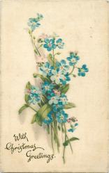 WITH CHRISTMAS GREETINGS bunch of  forget-me-nots