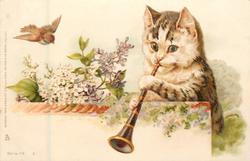 cat behind wall plays clarinet, bird above left, lilac