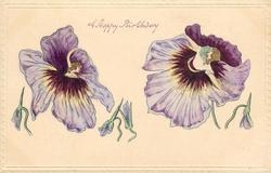 A HAPPY BIRTHDAY  flower fantasy, two pansies, like the skirt of women