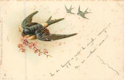 3 swallows, front bird carries pink blossom