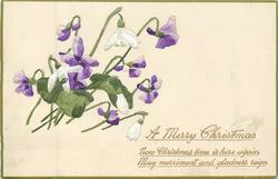 A MERRY CHRISTMAS violets