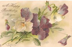 A HAPPY BIRTHDAY  TO YOU  multicolored pansies