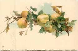 STUDY OF APPLE BOUGH