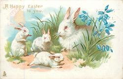 A HAPPY EASTER TO YOU mother rabbit & 3 young left of bluebells