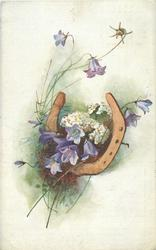 purple bell shaped flowers and white flowers with yellow centers inside horseshoe