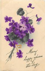 MANY HAPPY RETURNS OF THE DAY, bunch of violets, stems to lower left corner, ribbon bow
