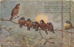 MANY HAPPY RETURNS six tits & a thrush perched