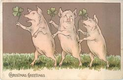CHRISTMAS GREETINGS  three pigs on hind legs dance left with 4 leaf clovers