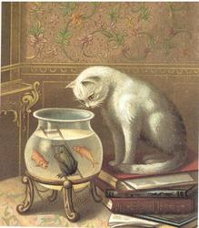 THE FISHER white cat peers into goldfish & frog bowl
