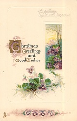 CHRISTMAS GREETINGS AND GOOD WISHES  violets