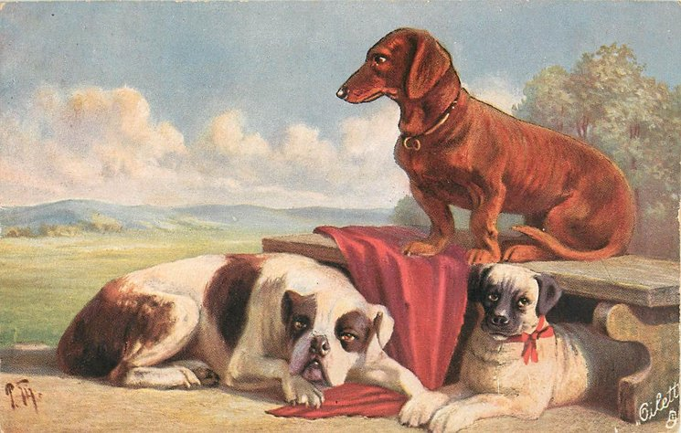 bright brown dachshund on bench looking left, bull terrier  on ground and another dog under bench
